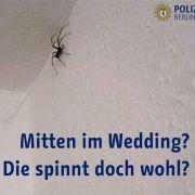 Notruf wegen Spinne im Badezimmer - Häme im Netz (Foto)