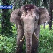 Da ist was krumm! Säbelzahn-Elefant in Malaysia entdeckt (Foto)