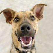 Süß und berühmt! Diese Instagram-Hunde sind echte Stars (Foto)