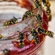 Hobbygärtner von Wespen zu Tode gestochen (Foto)