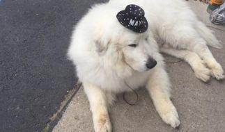 Duke ist in einem amerikanischen Dorf der Bürgermeister. (Foto)