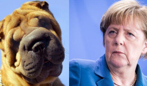 Ein Faltenhund und Bundeskanzlerin Angela Merkel: Sehen die beiden nicht knuffig aus?! (Foto)