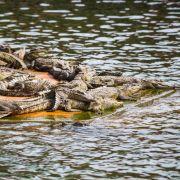 Vermisstes Mädchen Alligatoren zum Fraß vorgeworfen? (Foto)