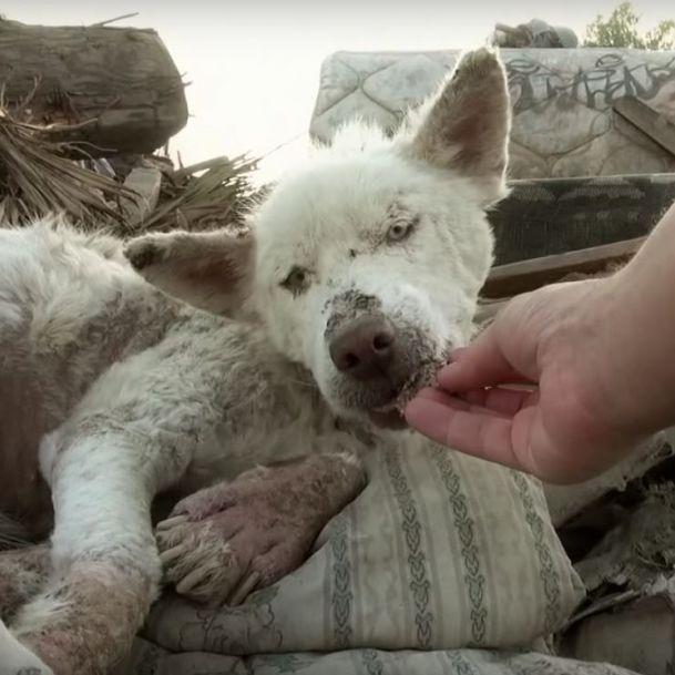 Ergreifend! Das sind die dramatischsten Hunderettungen (Foto)