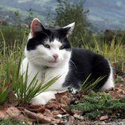 Katze rettet Bergsteiger und zeigt ihm Nachhauseweg (Foto)