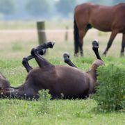 Tierhasser schießt Pferd ins Bein - verblutet (Foto)