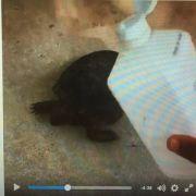 Live bei Facebook! Mann zündet Schildkröte an (Foto)