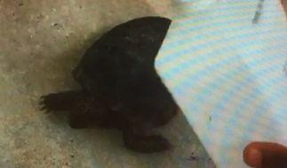 James Allen streamte seine Tierquälerei live ins Internet. (Foto)