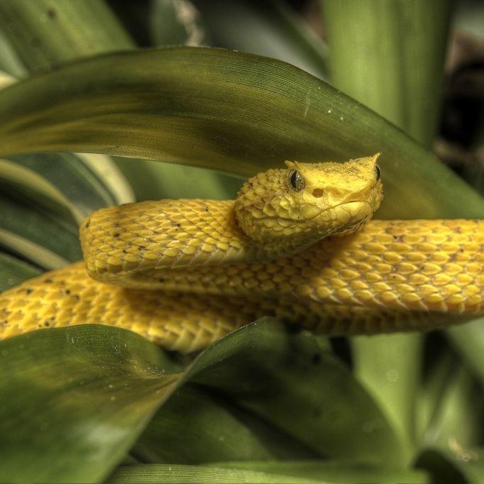 Wer hat DIESE Giftschlangen gesehen? (Foto)