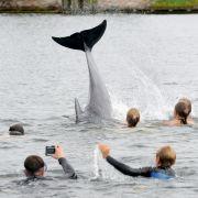 Dieser Tümmler fühlt sich in der Ostsee tierisch gut! (Foto)