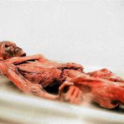 Eismumien-Skandal! Bizarre Verstrickungen rund um Ötzi-Fund (Foto)