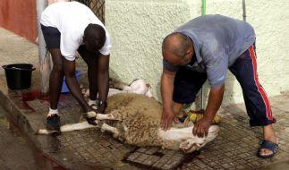 Beim Schächten wird dem Tier die Halsschlagader durchgeschnitten, damit es ausblutet. (Foto)