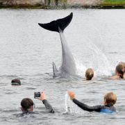 Ist der Flipper aus der Ostsee ein Killer-Delfin? (Foto)