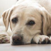 120 Hunde bei Feuer in Tierheim verbrannt! (Foto)
