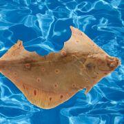 Angler zieht angefressenen verheilten Fisch aus dem Meer (Foto)