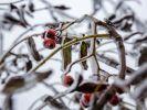 Der Winter schickt erste Vorboten nach Deutschland. (Foto)
