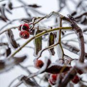 Großer Wintereinbruch! Hier erwartet Sie Schnee und Frost (Foto)