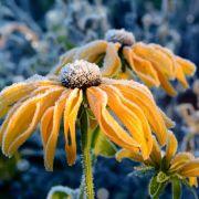 Goldener Oktober? HIER könnte die 20-Grad-Marke geknackt werden (Foto)