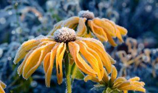 Der goldene Oktober lässt noch auf sich warten. (Foto)