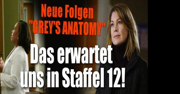 Greys Anatomy Schauen