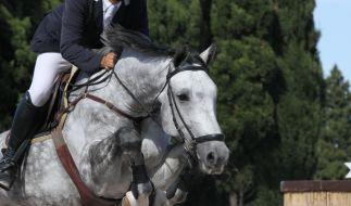 Ein Springreiter soll sein eigenes Pferd zu Tode geprügelt haben. (Foto)