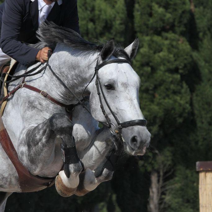 Springreiter quält eigenes Pferd zu Tode (Foto)