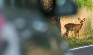 Besonders in den morgendlichen und abendlichen Dämmerungszeiten ist die Gefahr von Wildwechseln auf Straßen besonders hoch. (Foto)
