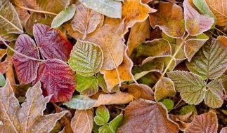 Sonnen-Herbst oder Kälte-Alarm? Der Hundertjährige Kalender verrät, wie der November werden könnte. (Foto)