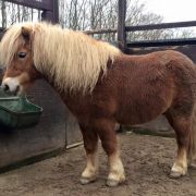Perverser Tierquäler vergeht sich an Pony (Foto)
