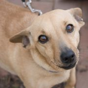 Kurios! Hund entgeht nur knapp der Todesstrafe (Foto)