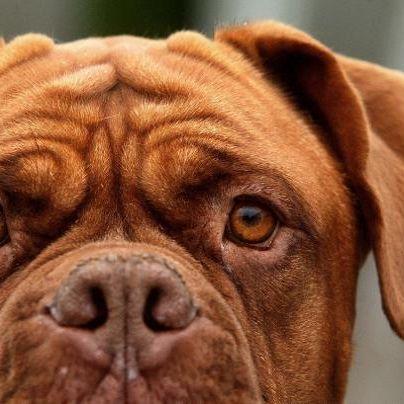 Kind (5) von vier Hunden zerfleischt (Foto)