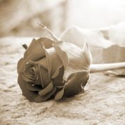 Trauer zu groß! Prinzessin begeht Suizid (Foto)
