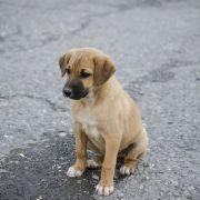 Beim Warten auf Herrchen: Hund stirbt einsam auf der Straße (Foto)