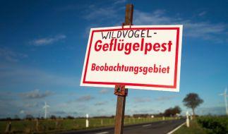 Die Vogelgrippe breitet sich in Deutschland rasend schnell aus. (Foto)