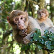 Mindestens 20 Tote nach blutiger Affen-Attacke (Foto)