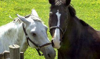 Ein perverser Tierquäler hat ein Pferd auf einer Koppel im sächsischen Klipphausen so gequält, dass das Tier schwere Verletzungen erlitt und eingeschläfert werden musste (Symbolbild). (Foto)