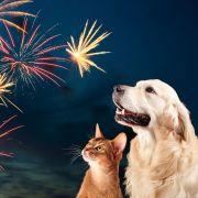 So werden Hund und Katz immun gegen Böller und Raketen (Foto)