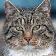 Pfoten festgefroren! Tollpatsch-Katze bleibt in Pfütze stecken (Foto)
