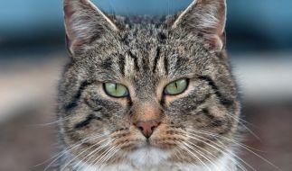 Rettungsaktion in letzter Sekunde: Eine Katze ist in Russland mit den Pfoten in einer Pfütze festgefroren, konnte jedoch von berherzten Passanten befreit werden (Symbolbild). (Foto)