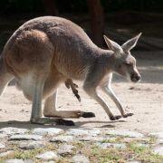 Zoowärter darf seinen Job behalten (Foto)