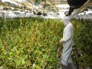 Cannabis-Plantage entdeckt