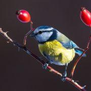 Gartenruhe! Das müssen Sie trotzdem im Januar tun (Foto)