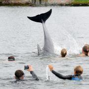 """Das Jahr der Meeressäuger: """"Selfie"""", """"Delfie"""" und viele tote Wale (Foto)"""