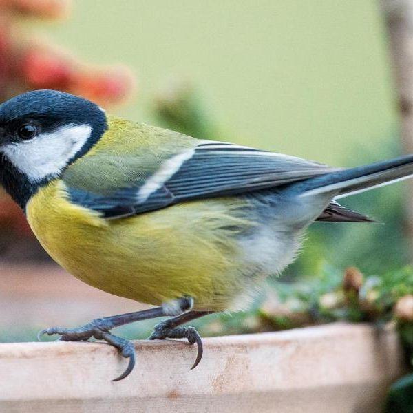 So funktioniert die Nabu-Vogelzählung (Foto)