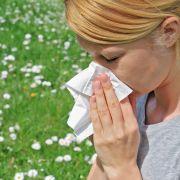 Vorsicht, Frühblüher! Diese Pollen ärgern Allergiker schon jetzt (Foto)