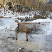 Fuchs im Eisblock! DAS ist passiert (Foto)