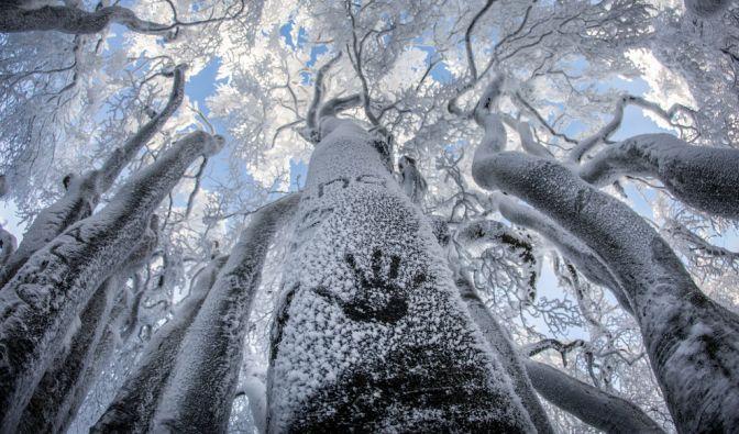 Der Winter 2016/17 hat Deutschland fest im Griff. Schnee, Frost und Kälte verwandelten viele Teile der Republik in Eislandschaften. (Foto)