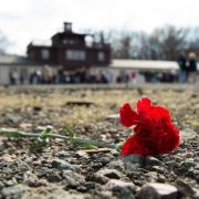 AfD-Mann Höcke nach Hetzrede zum Gedenken nicht willkommen (Foto)