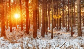 Wie das Wetter im Februar 2017 werden könnte, verrät der Hundertjährige Kalender. (Foto)