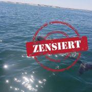 Delfin in Shirt gefangen - Wer macht denn sowas? (Foto)